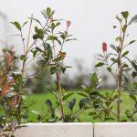 abwechslungsreiche-bepflanzung